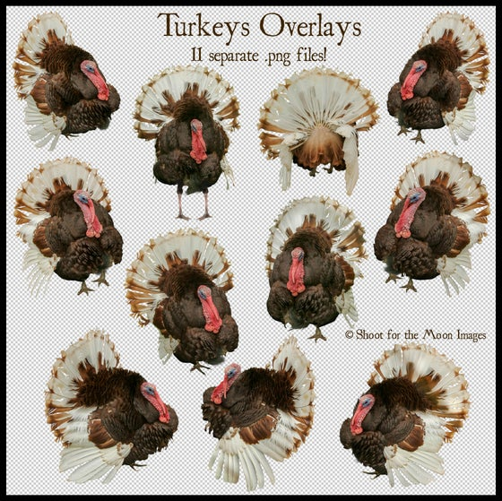 Image of Turkeys Overlays