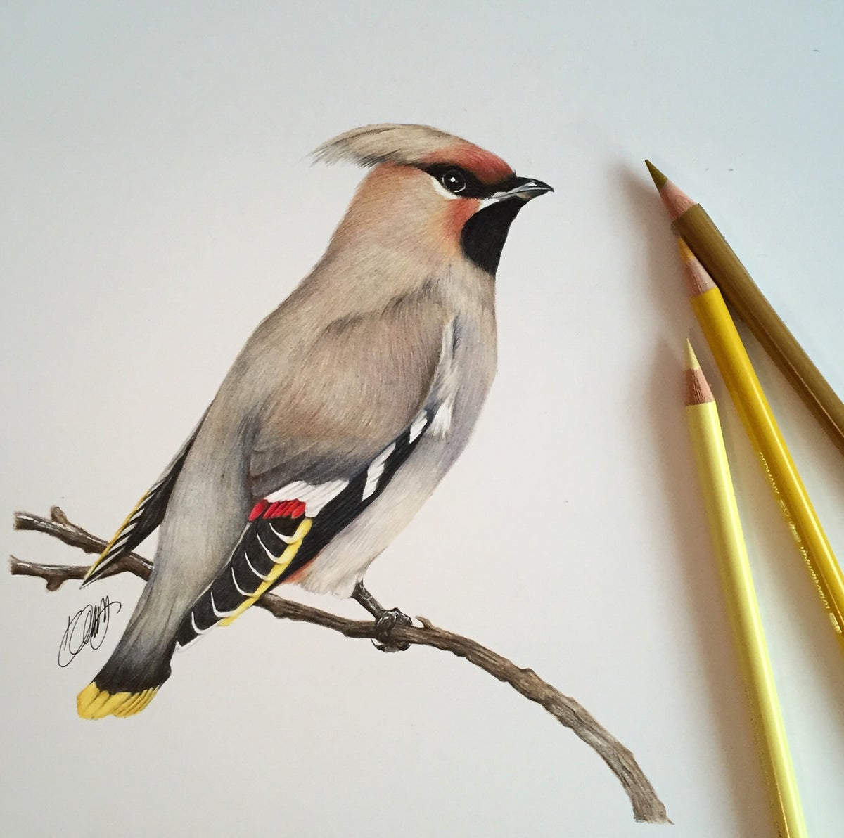 """Image of """"Waxwing"""" Limited Edition Print"""