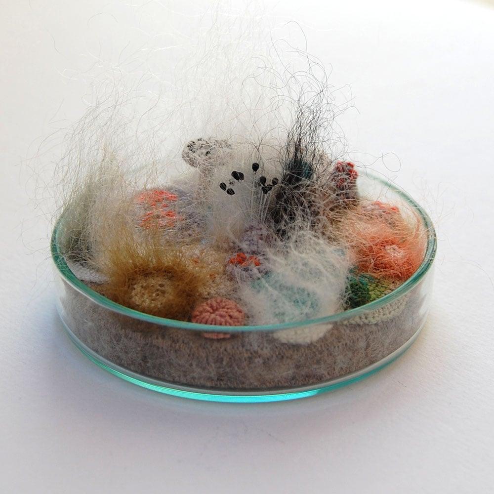 Image of Mouldy mayhem petri dish, Limited edition No. 2/10