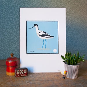 Image of Avocet
