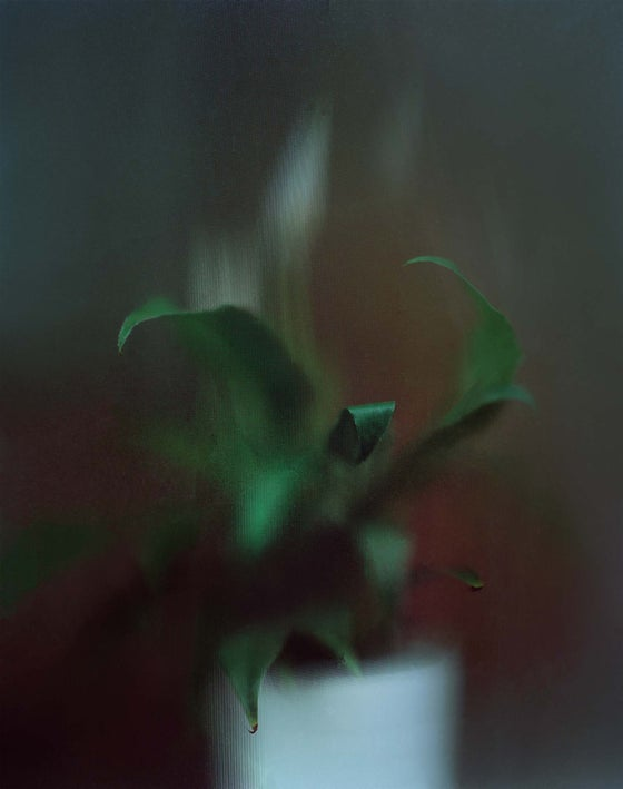 Image of Window Plant, Signed + Editioned Print