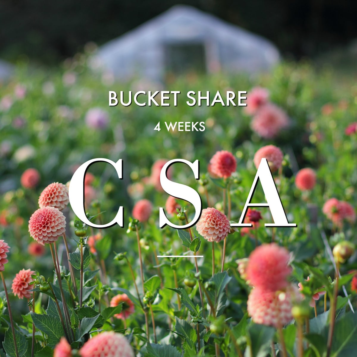 Image of CSA BUCKET SHARE -~ 4 Week Subscription