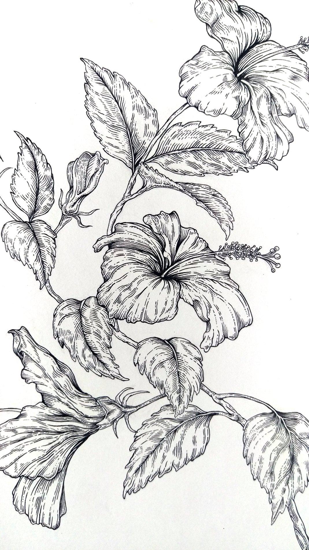 Image of Red Hibiscus (Hibiscus rosa-sinensis)