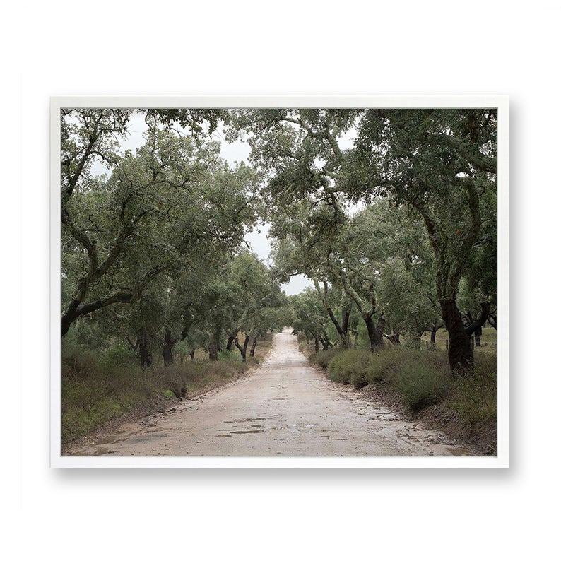 Image of Cork Tree Road, Portugal