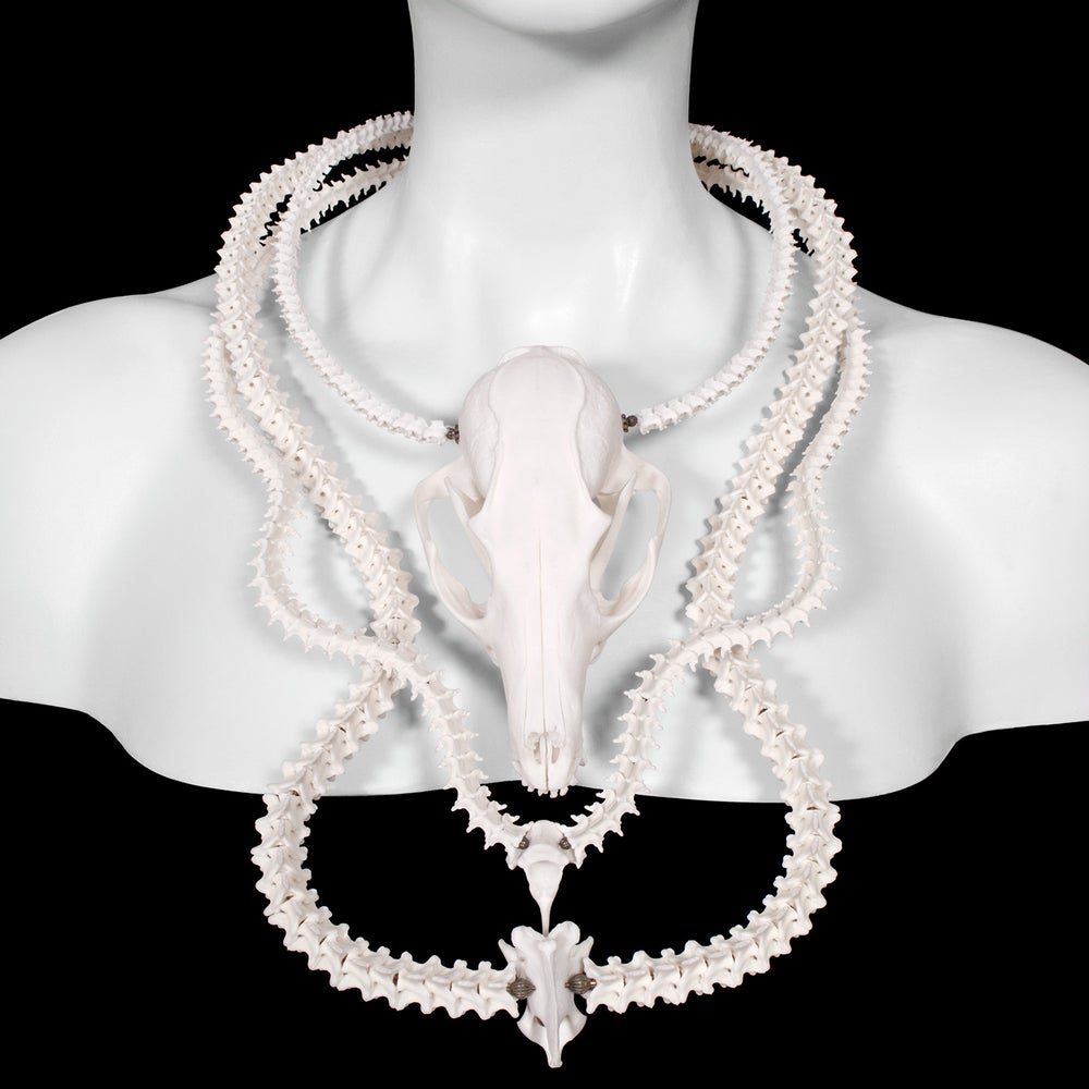 Image of Fox Skull and Snake Vertebrae Necklace