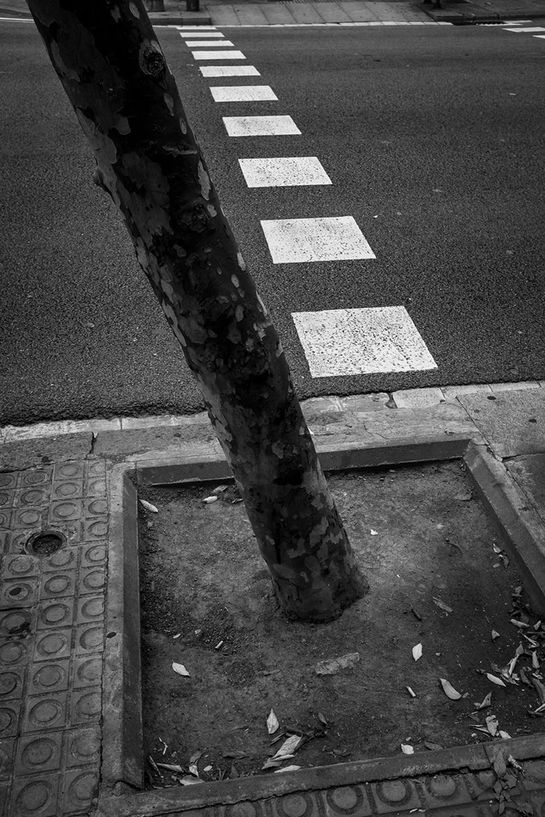 Image of Tree with road markings