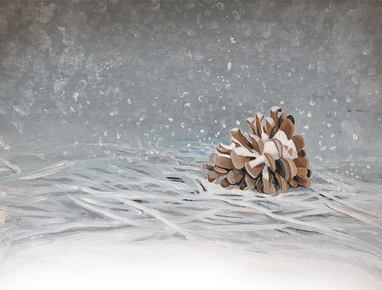 Image of Pinecone