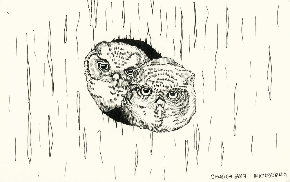 Image of Inktober #9 - Owls