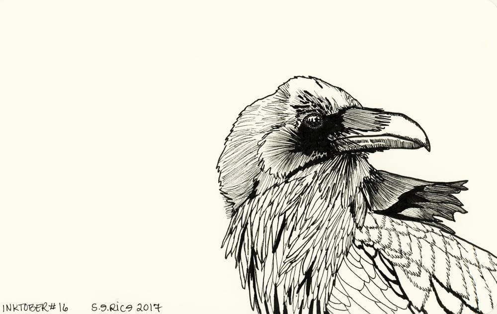 Image of Inktober #16 - Raven