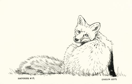Image of Inktober #19 - Fox