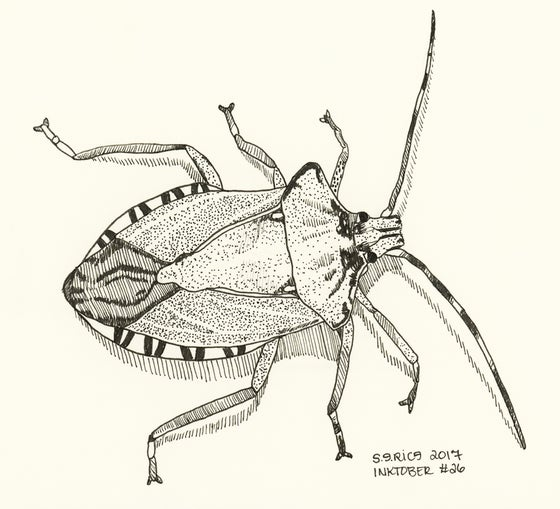 Image of Inktober #26 - Stink Bug