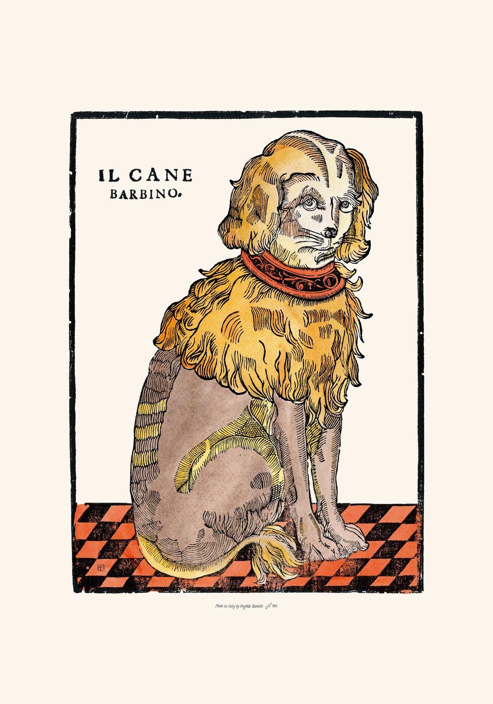 Image of IL CANE BARBINO