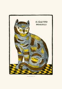 Image of IL GATTO DOMESTICO