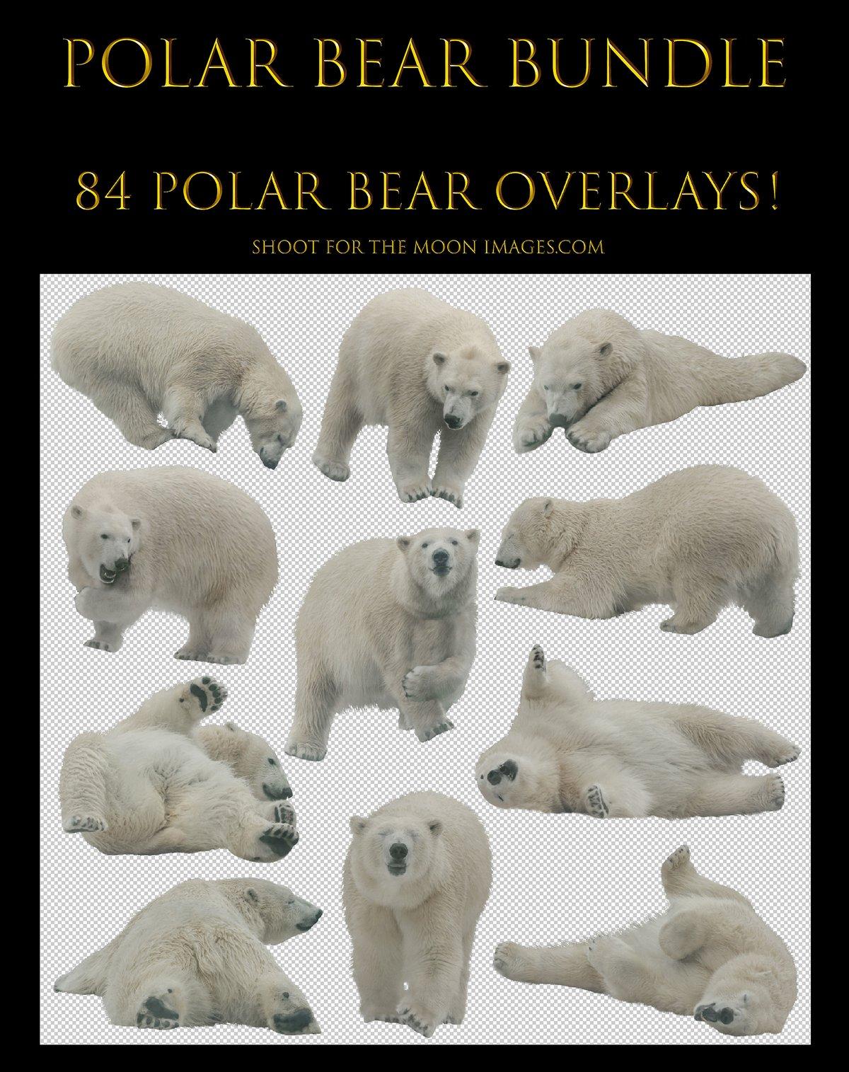 Image of Polar Bear Bundle