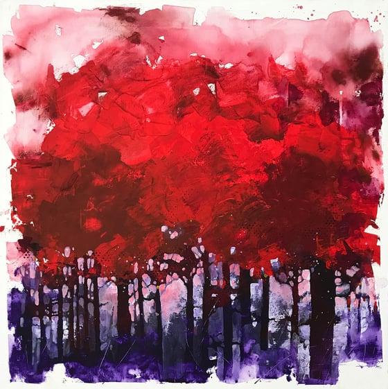 Image of Io sono una selva e una notte di alberi scuri