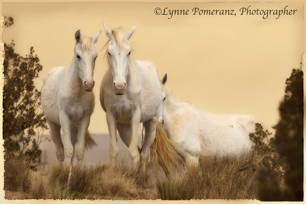 Image of Ghost Horses