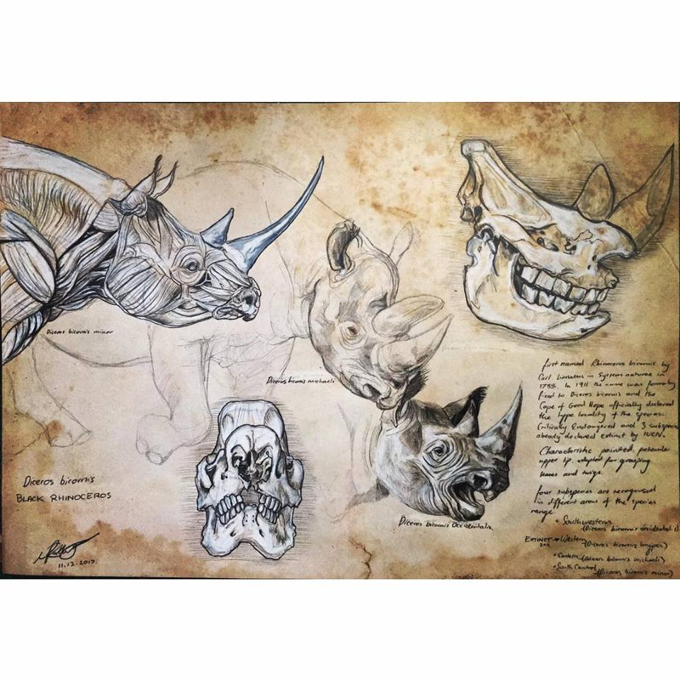 Image of Black Rhino Anatomy Plate I Limited Edition Print [21 by 29.7 cm]