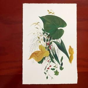Image of Plant Study, Original