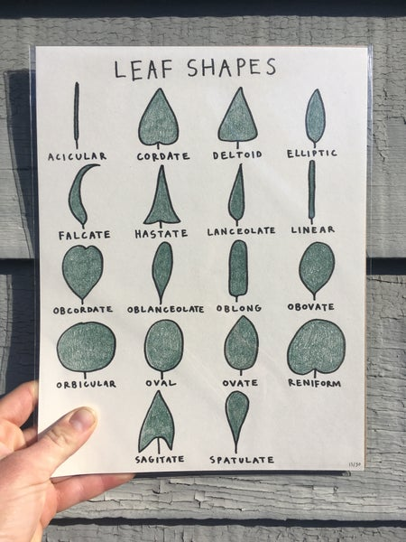 Image of Leaf Shape Chart