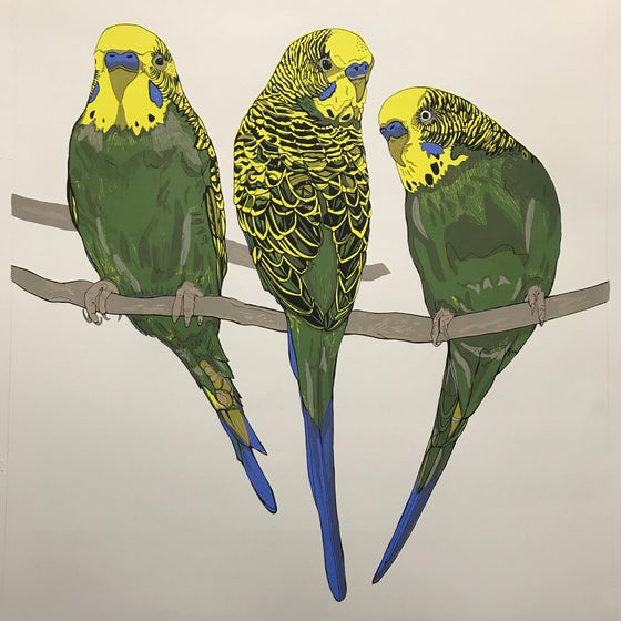 Image of Budgerigars screen print