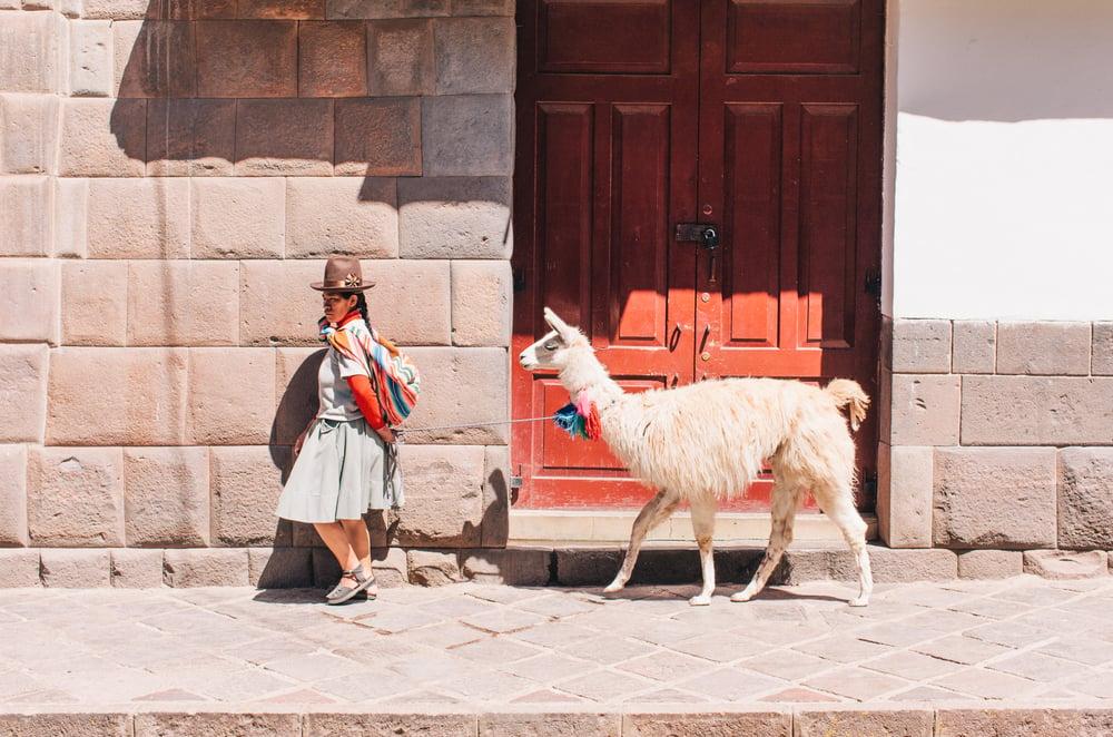 Image of Lama, Peru