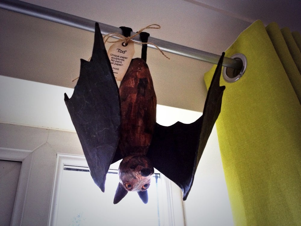 Image of Fruit Bats
