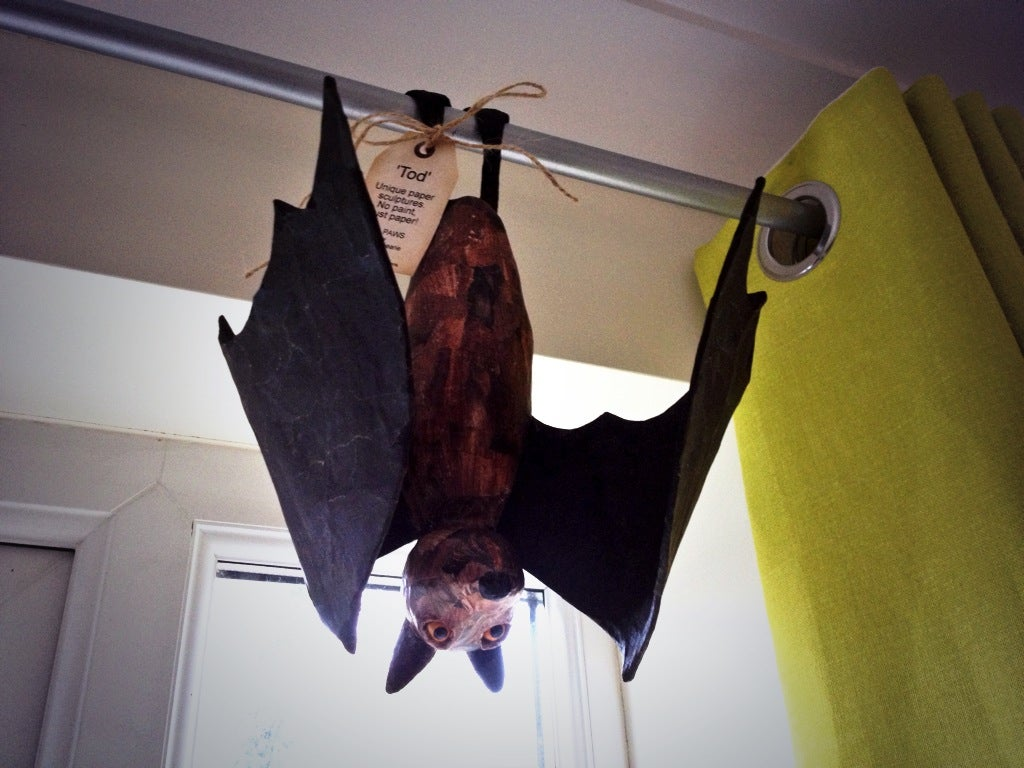 Image of Fruit Bats