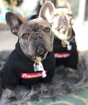 Image of Frenchie Dog Hoodie