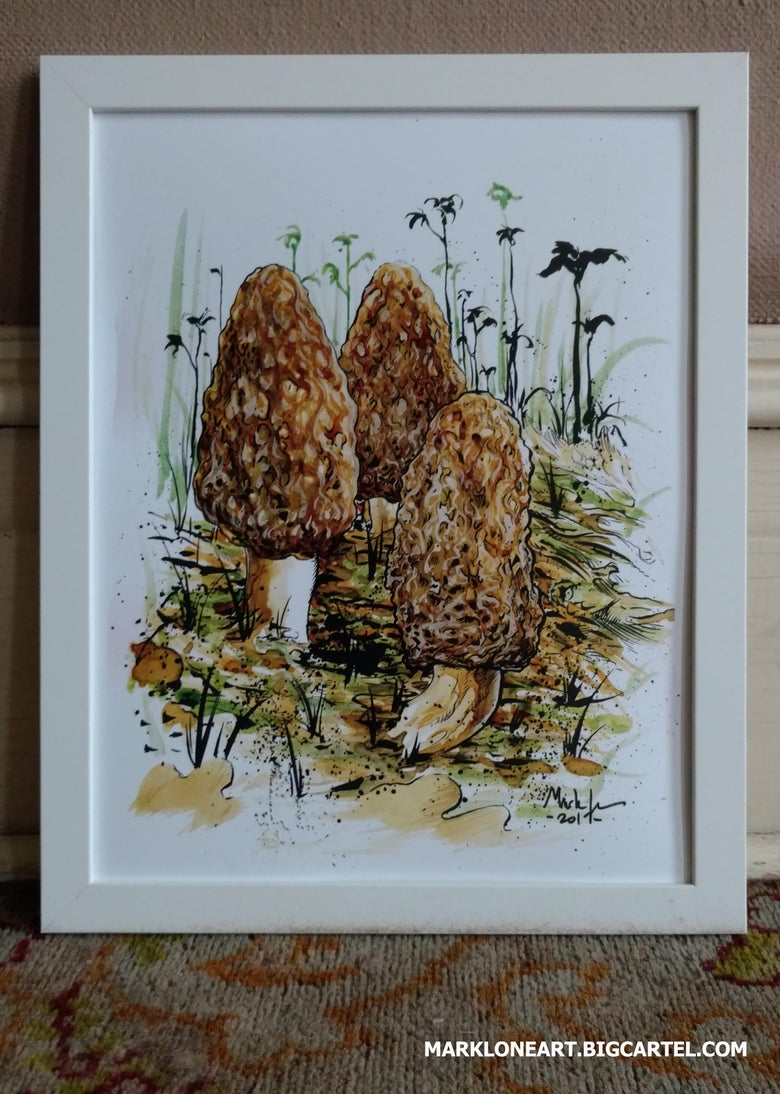 Image of morels