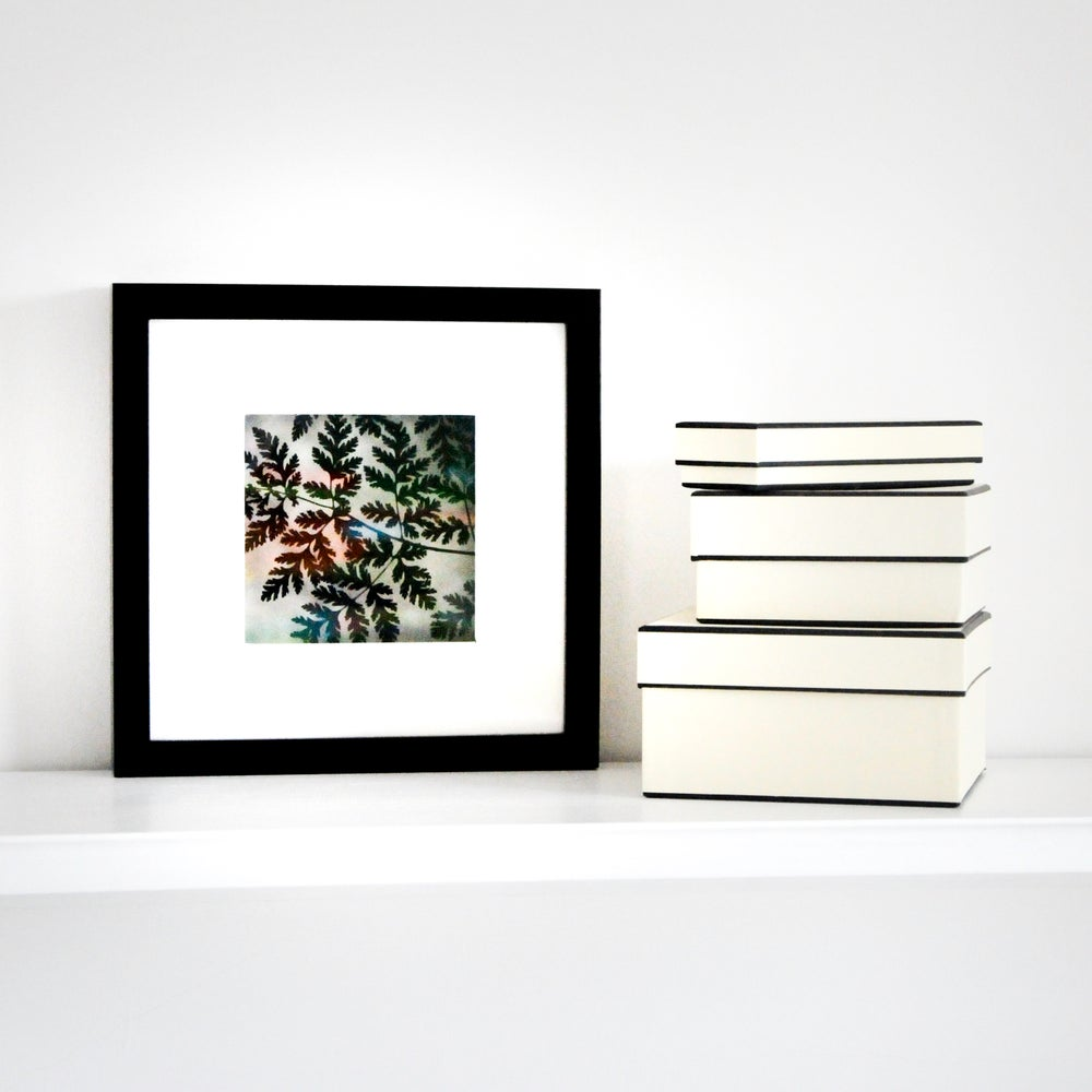 Image of Framed Paper Cut Sweet Cicely