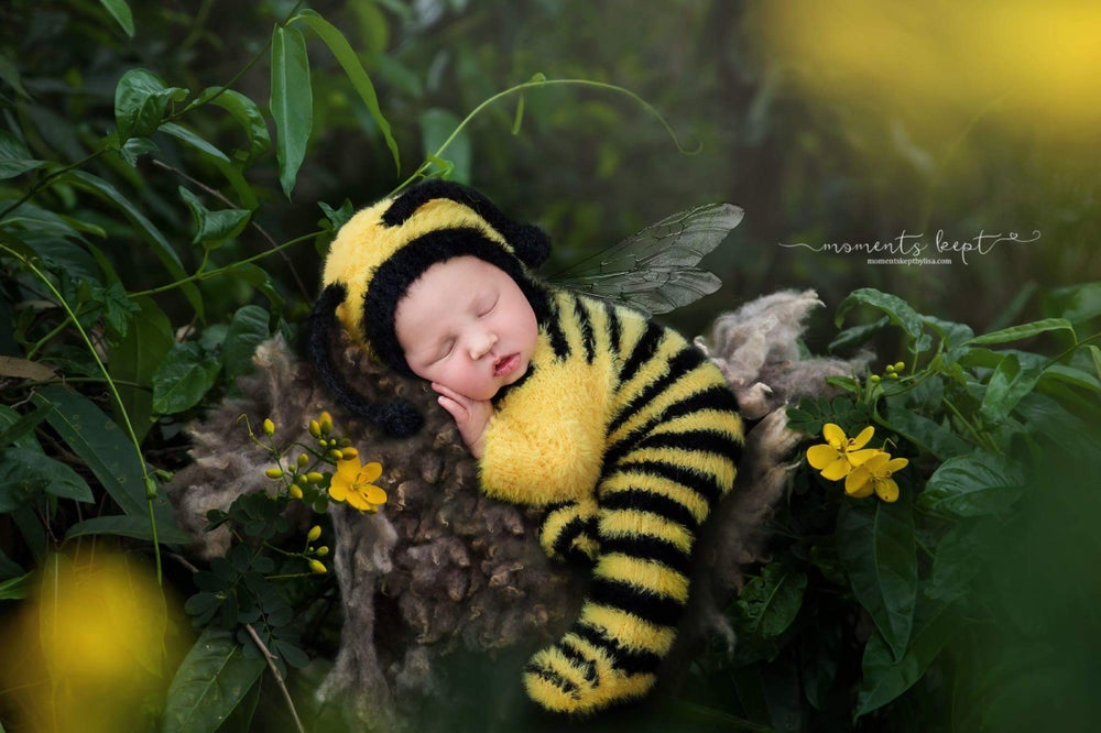 Image of LITTLE {FUZZY BUZZY} BEE