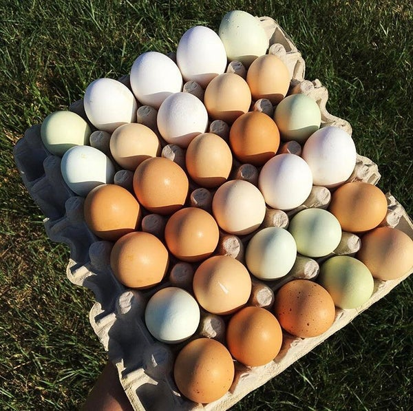 Image of 1 Flat of eggs