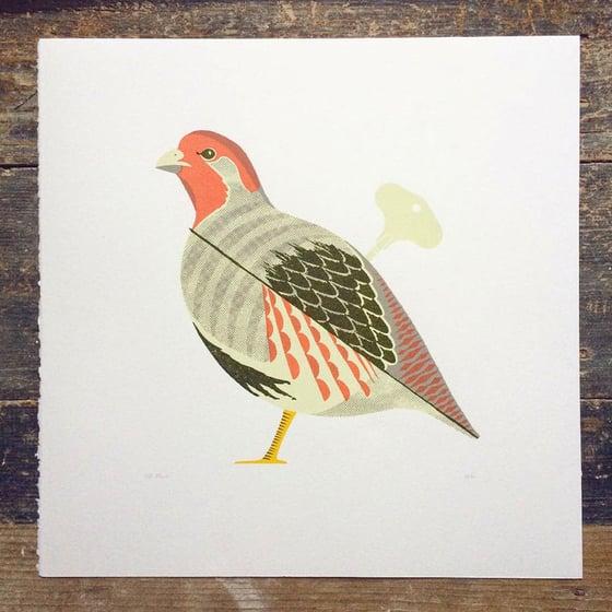 Image of Grey Partridge