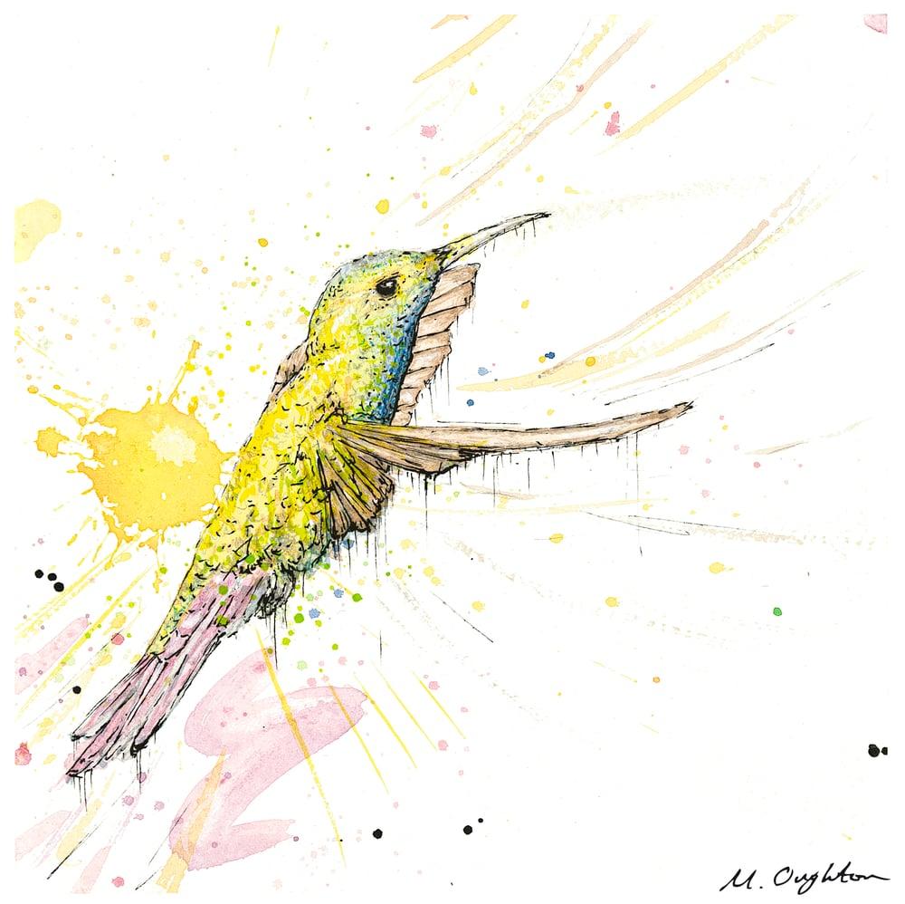 Image of Flight of a Humming bird No.2 - Print