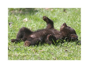 Image of Four Cub photos