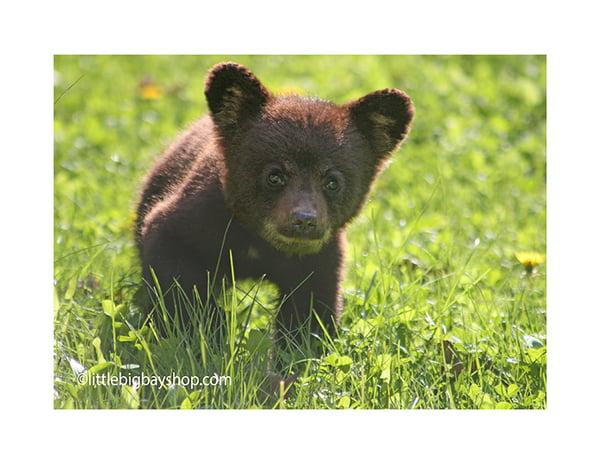 Image of Cub 9698
