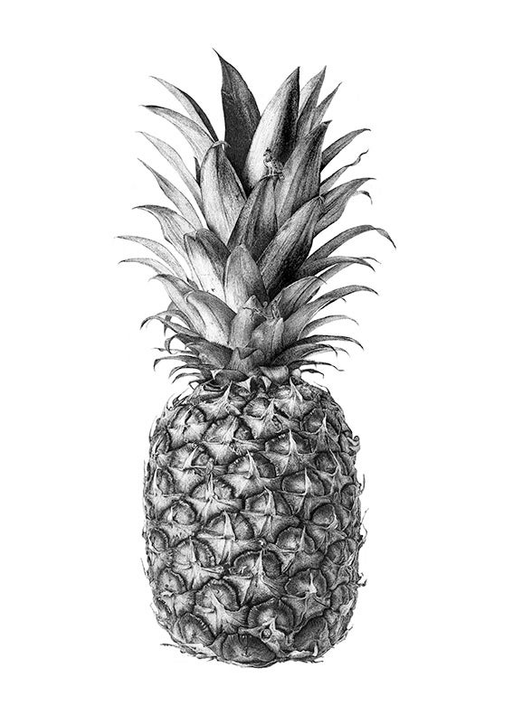 Image of Rainforest Rewild Pineapple. From