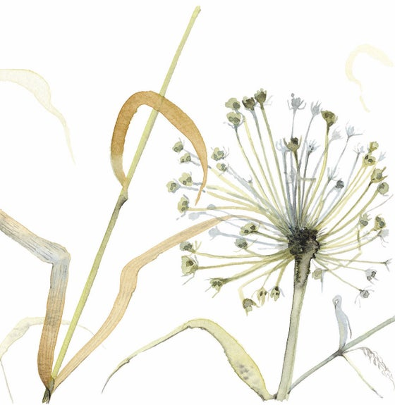 Image of Allium and Grasses