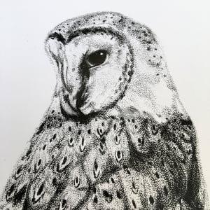 Image of Owl & Skull Print