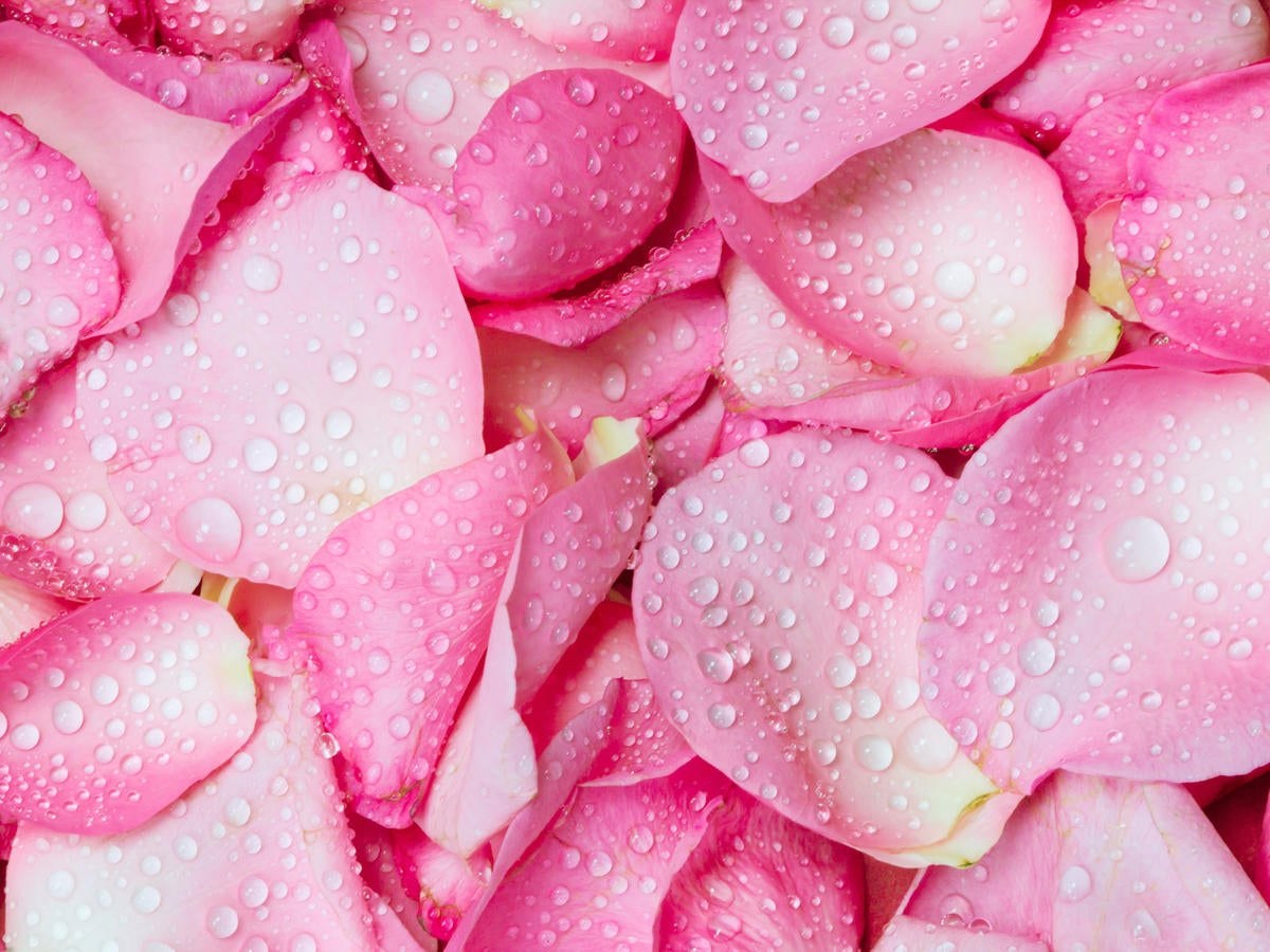 Image of Rose Water Toner