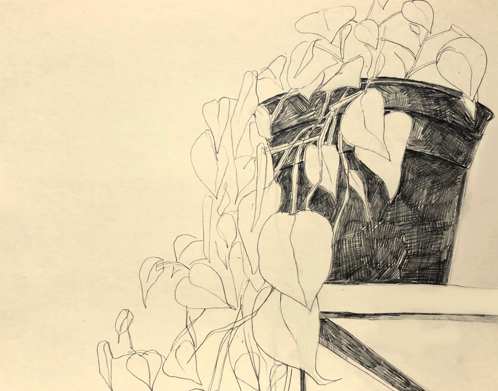 Image of Philodendron Original Drawing