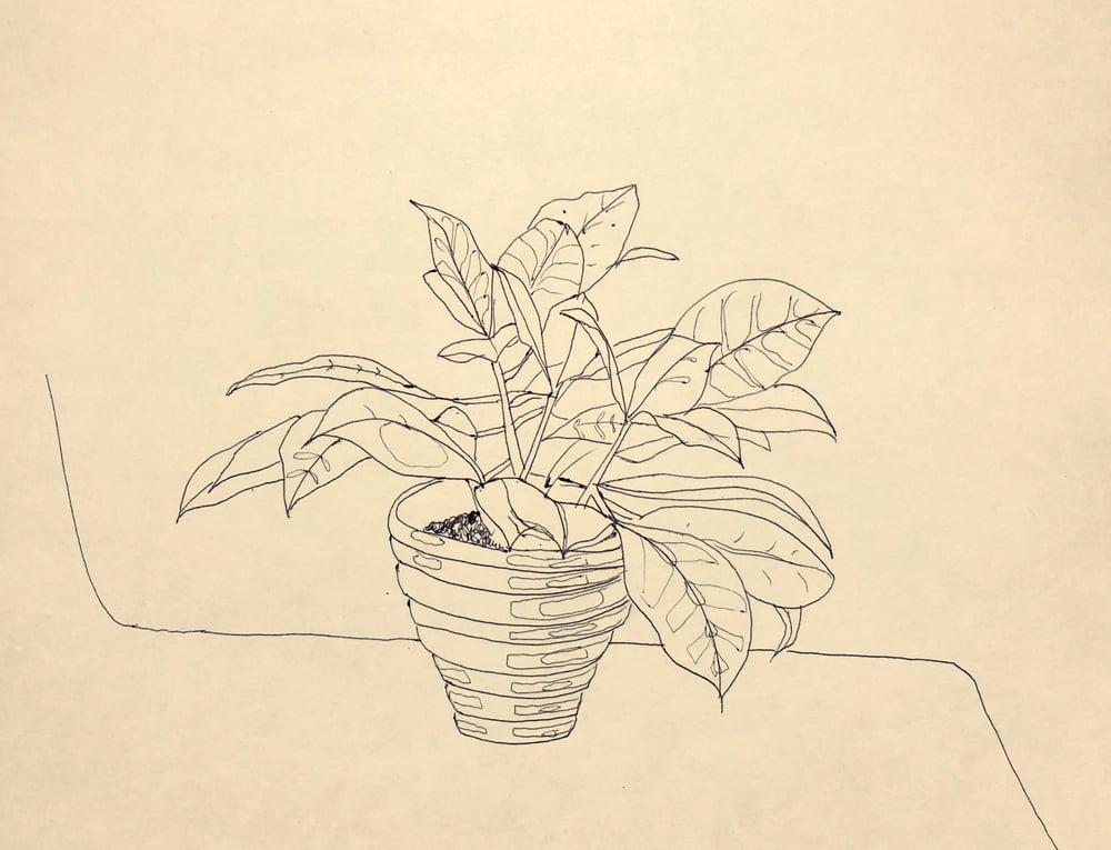 Image of Croton Original Drawing