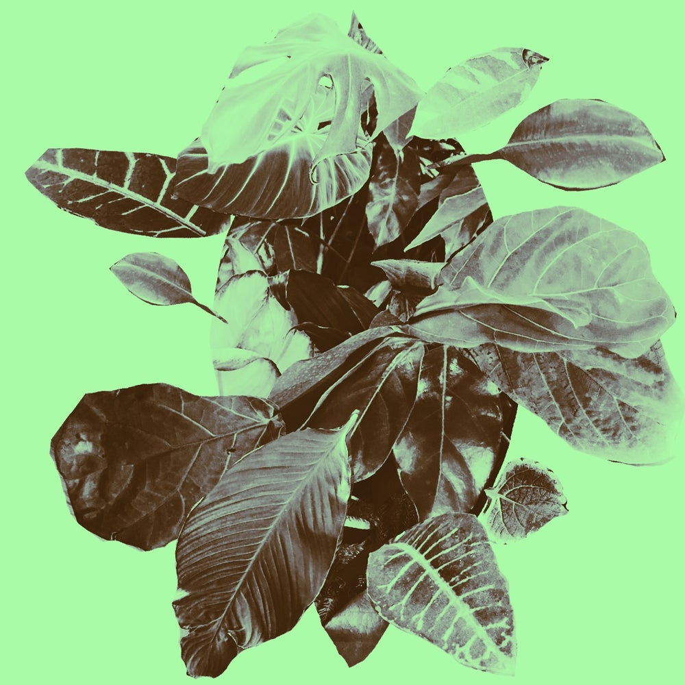 Image of Plant Collage No 1 Print