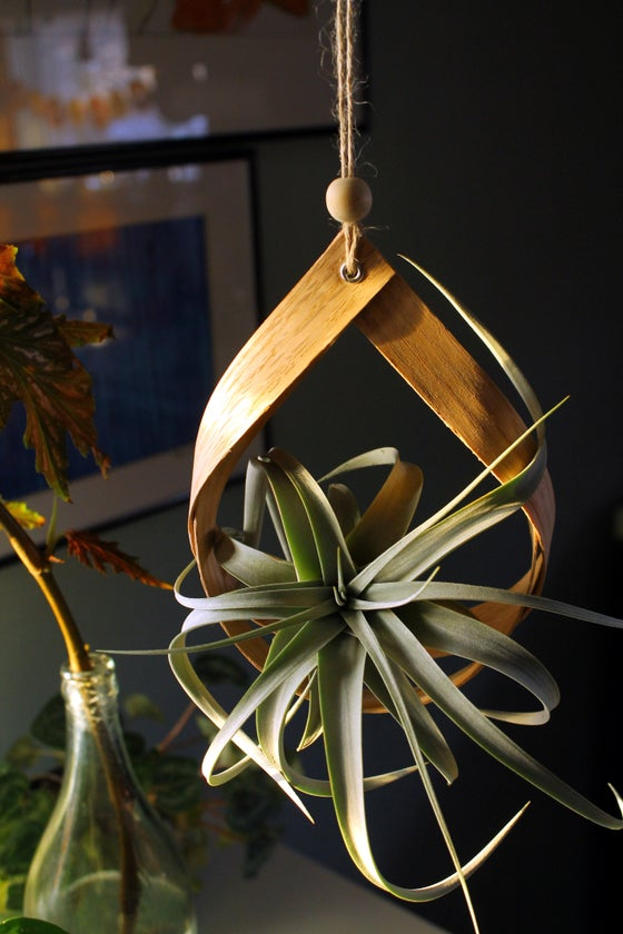 Image of Wooden Air Plant Hanger
