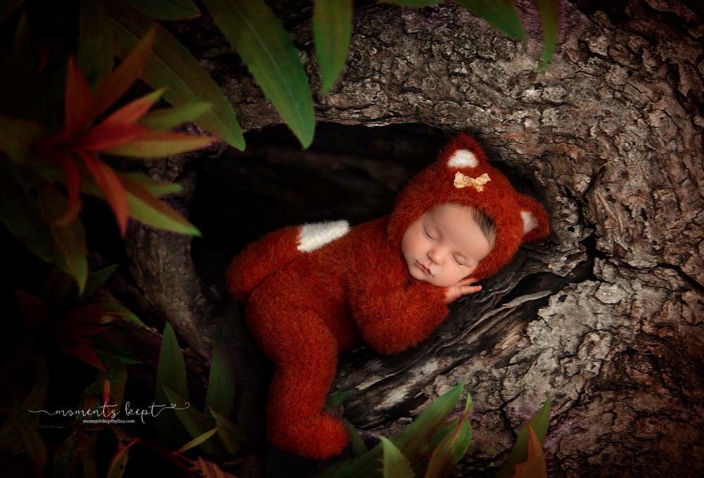 Image of Furry Little Fox