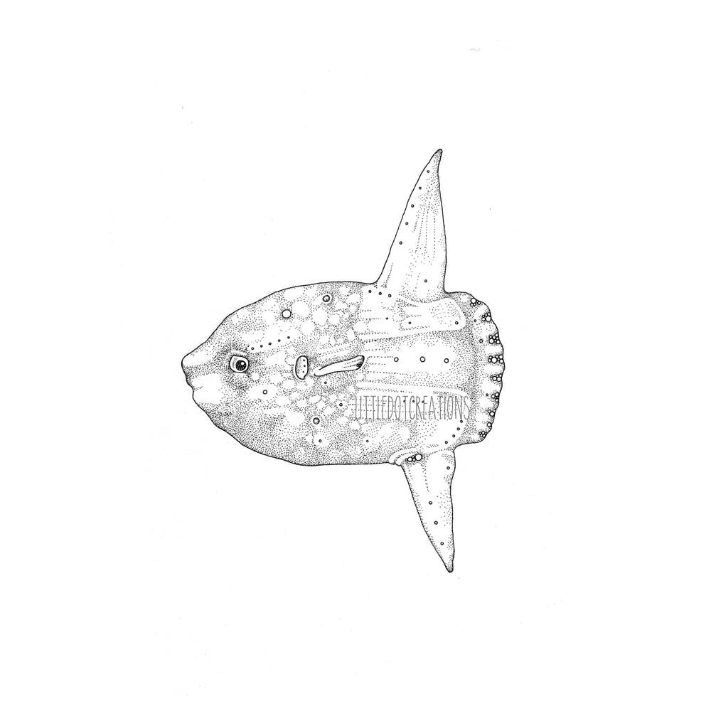 Image of Mola Mola