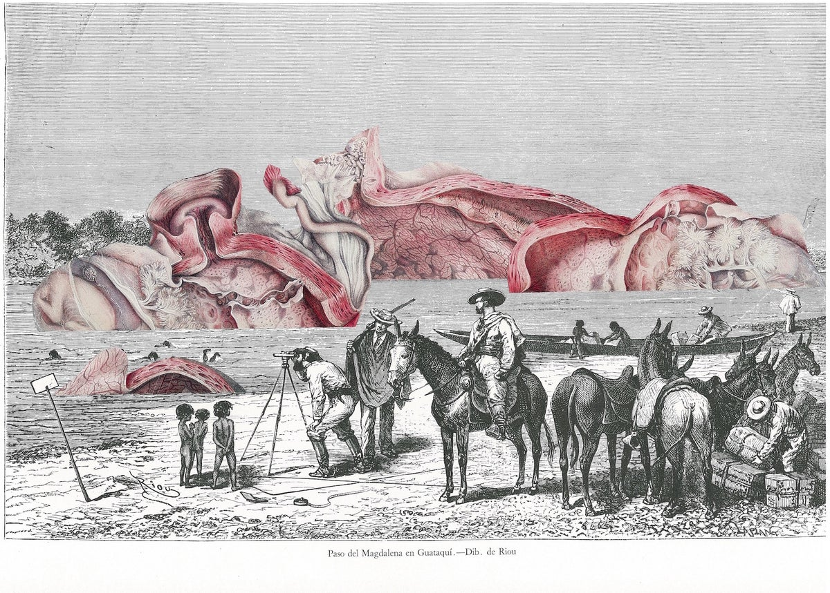 Image of Anatomie de la Nature #6