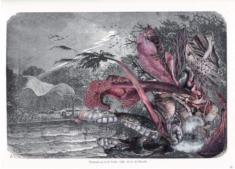 Image of Anatomie de la nature #10