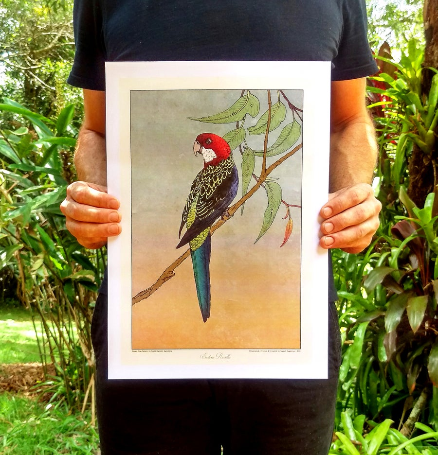 Image of Eastern Rosella
