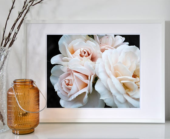 Image of Blush Roses